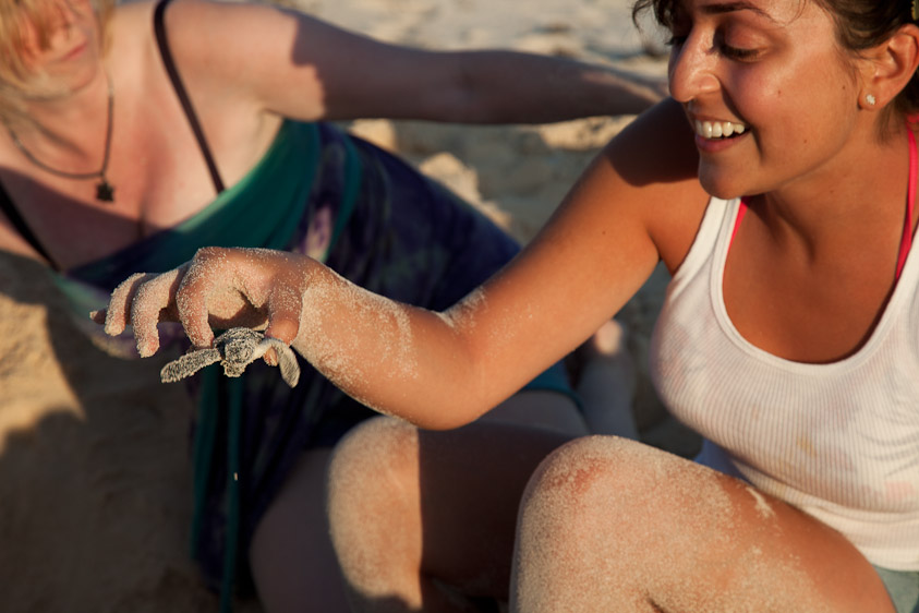 Cozumel Turtle Rescue